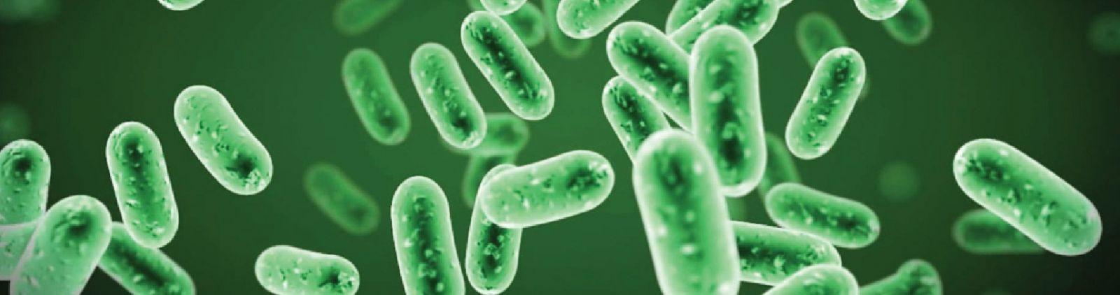 Vi sinh vật xử lý nước thải sinh hoạt