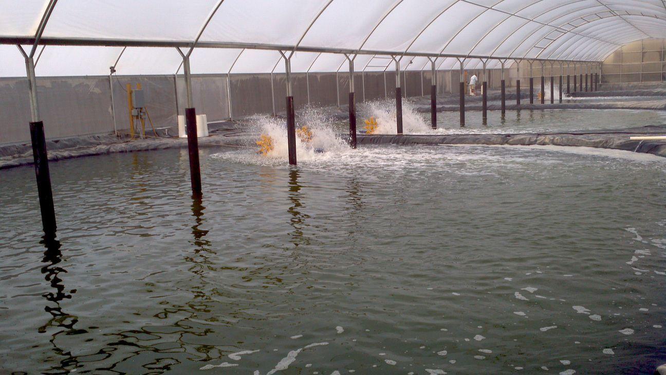 Dự án xử lý nước thải nuôi tôm