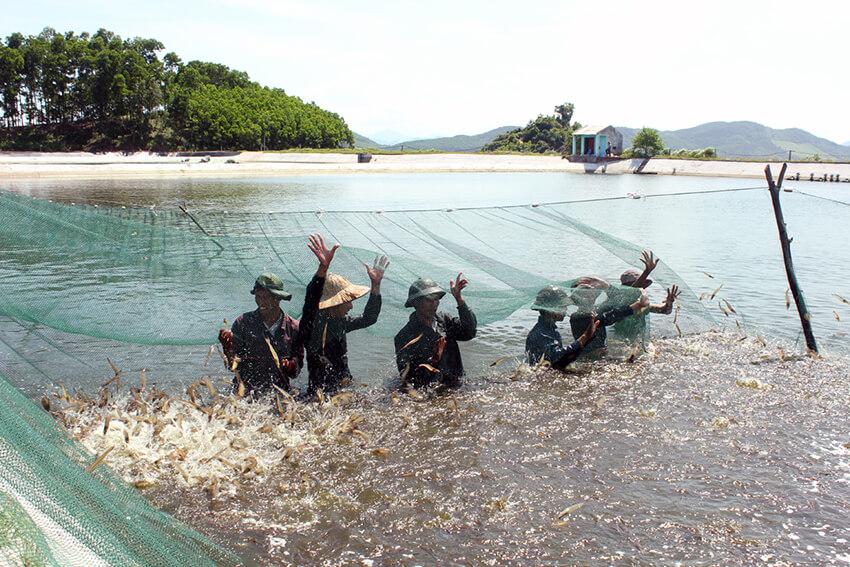 Hệ thống xử lý nước thải nuôi tôm