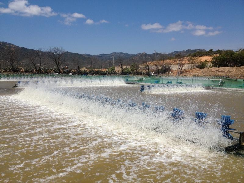 Xử lý nước thải nuôi trồng thủy sản