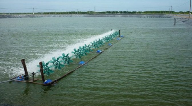 Các phương pháp xử lý nước thải nuôi tôm