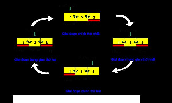 Hệ thống xử lý nước thải trong bể Unitank