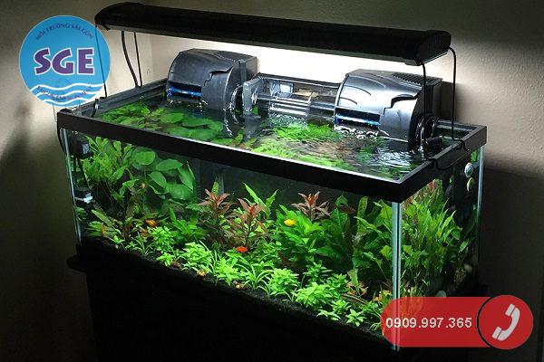 Cách khử Clo xử lý nước máy để nuôi cá