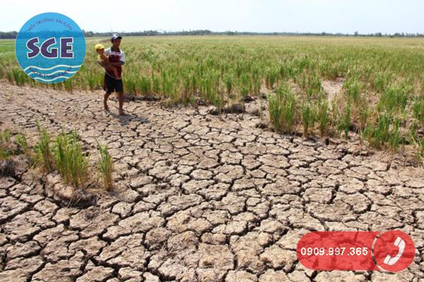 Tác hại của hạn mặn đối với sản xuất nông nghiệp